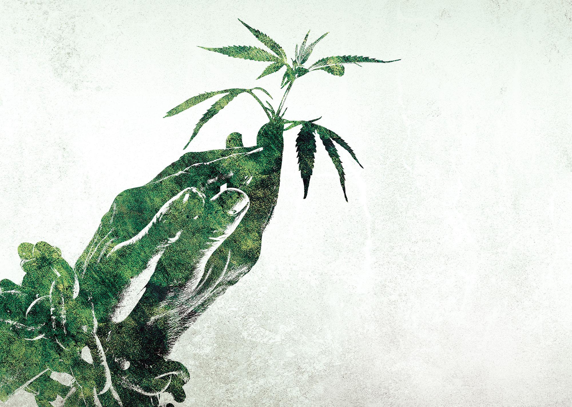 Der-Cannabis-Irrsinn-(01)