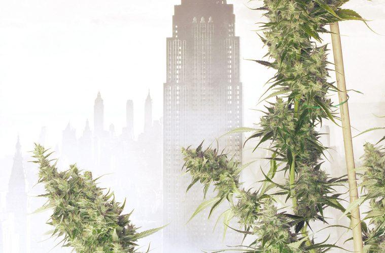 New-York-City-Diesel
