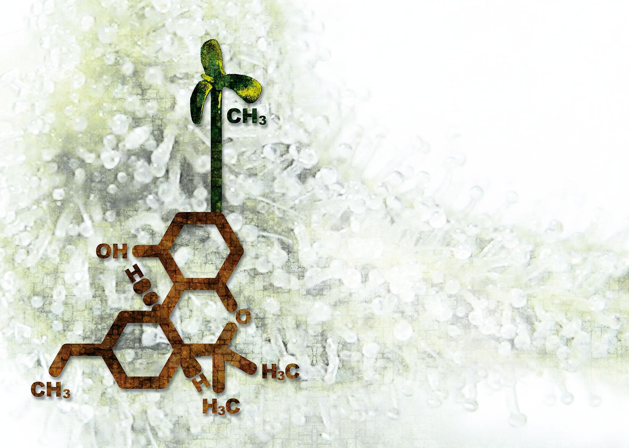 Cannabinoide-in-Pflanzen-01
