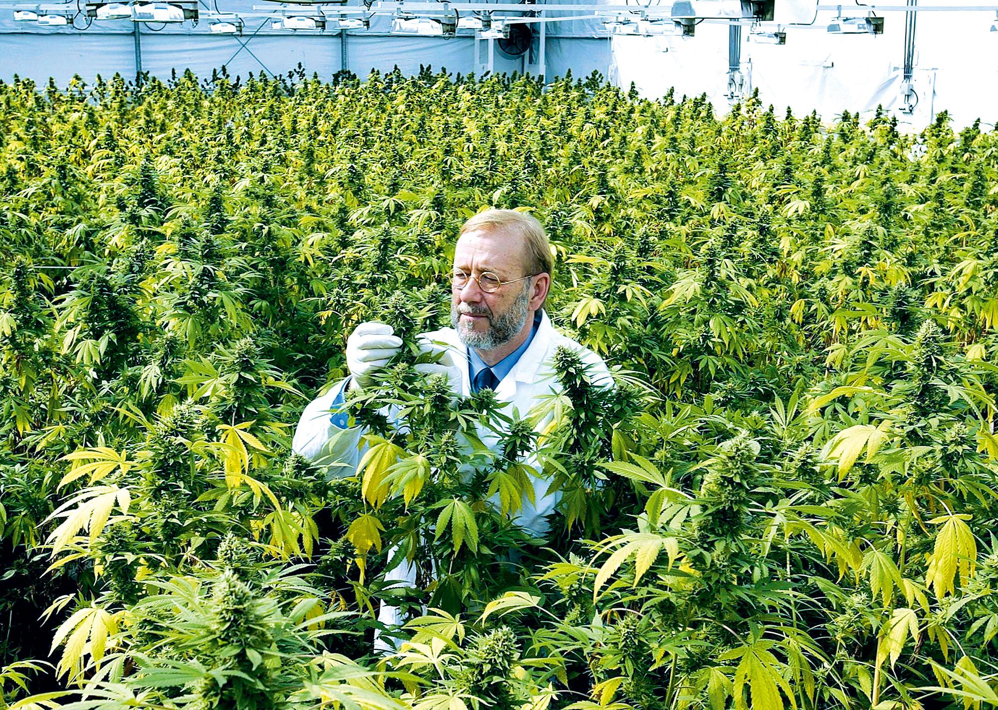 Cannabis-Agentur-(01)