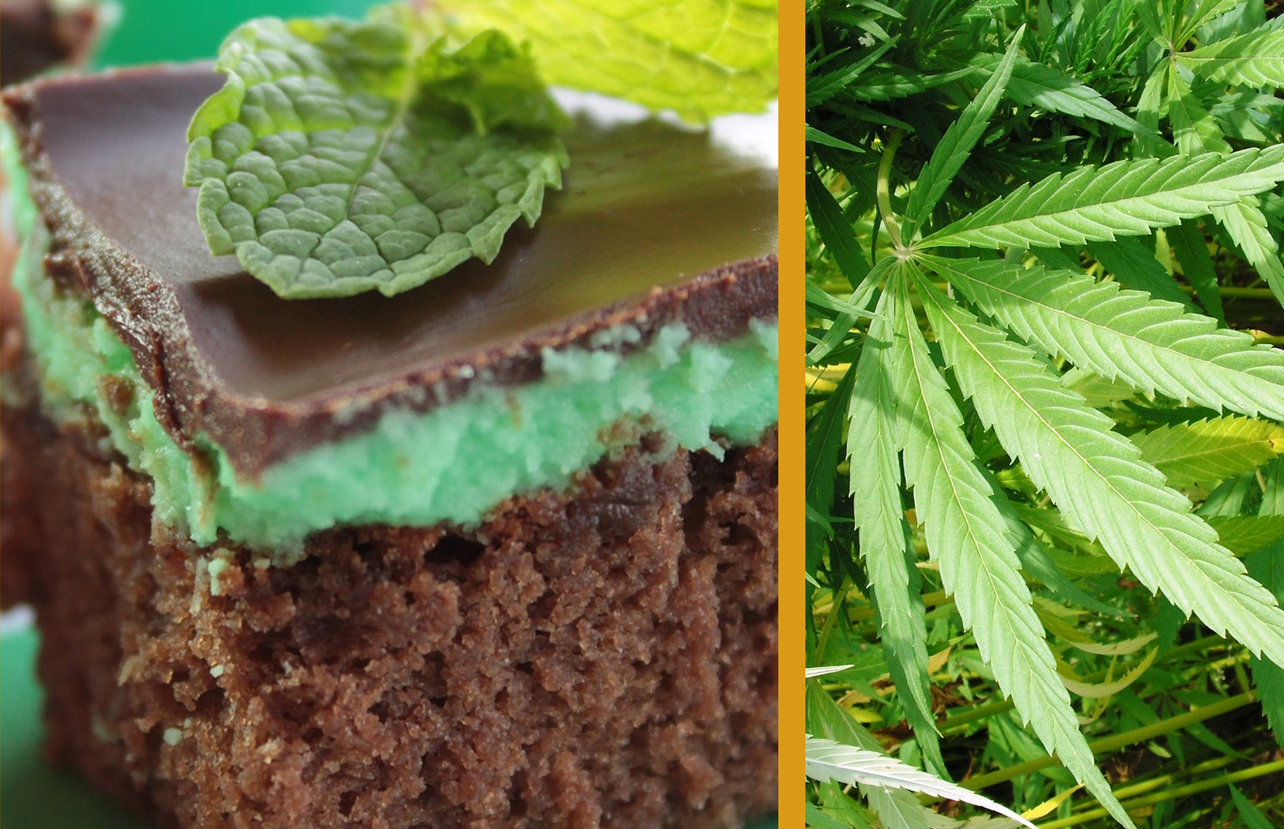 Die Vorteile des Essens von Cannabis