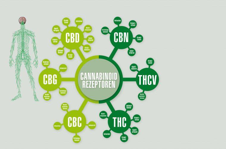 Cannabinoid-System-(01)