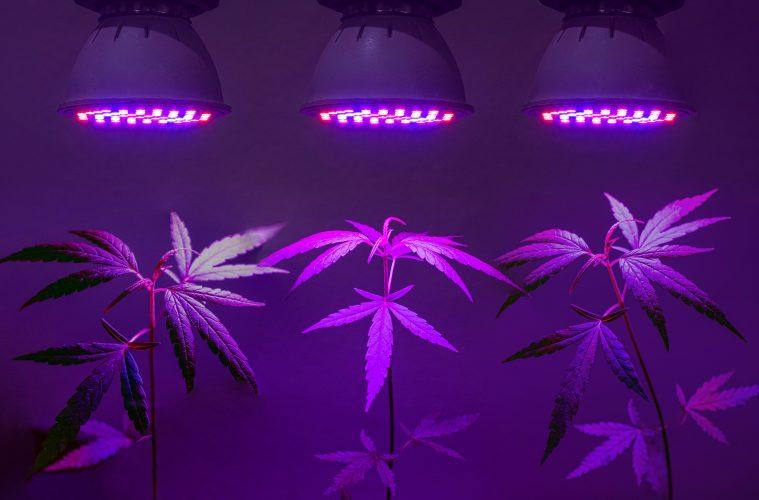All about LED - Der Licht-Guide für den professionellen Grower, Teil 1