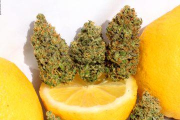 5-Top-Zitronensorten_00