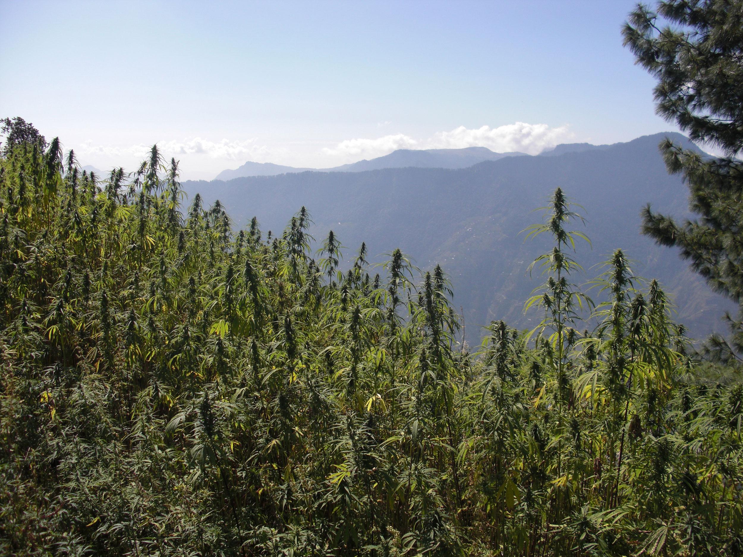 Reisebericht: Indiens legendäres Kifferparadies
