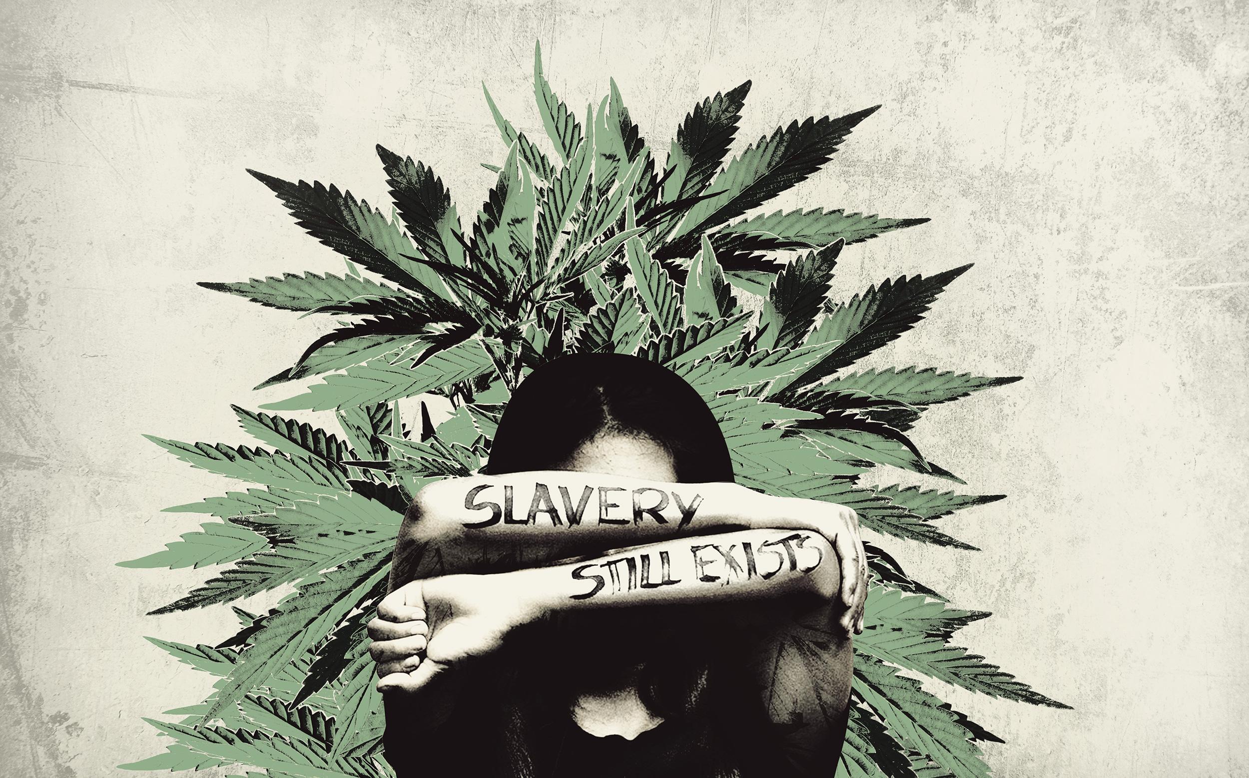 Moderne Sklaverei - Auch illegale Cannabis-Plantagen profitieren davon