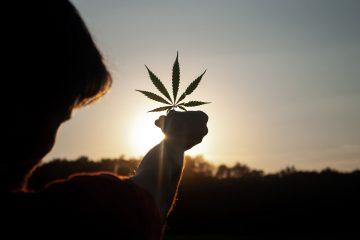 Cannabis im Alltag header