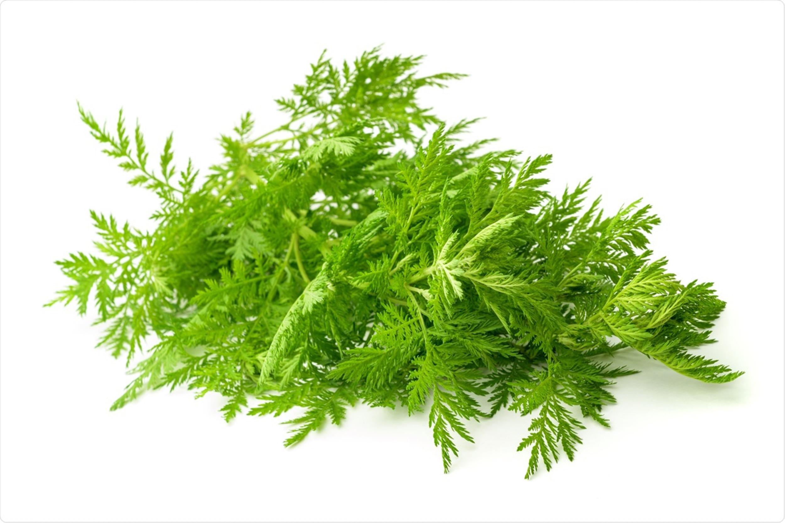 Artemisia annua - Eine Pflanze der Hoffnung